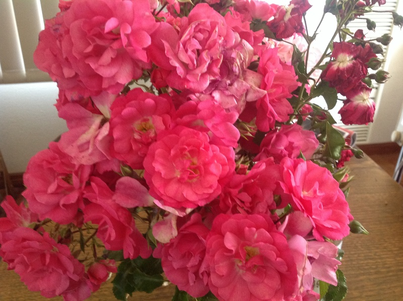 Pink roses saying I love you